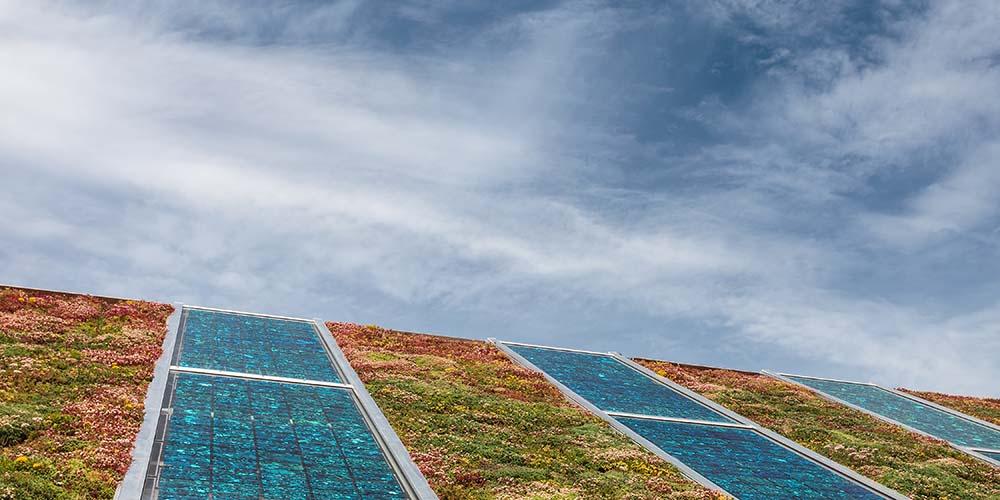Groeiversneller Zon; Groene bushokjes Wageningen; Sedum en zonnepanelen
